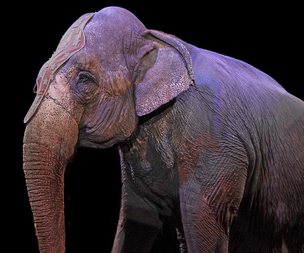Alle Tiere leiden im Zirkus